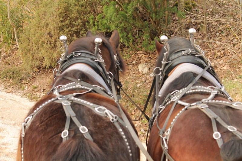 kutschenfahrt im schloss thurn mit zwei pferden